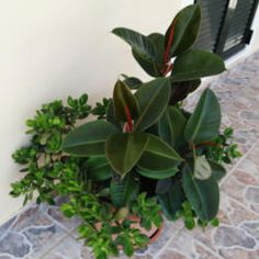 Use milk instead of oil for your houseplants (All Things Plants)