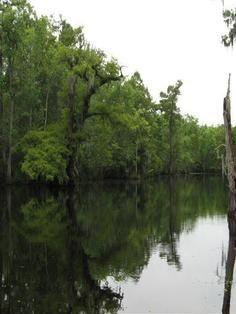 Calm Bayou Waters