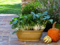 13 Fast Growing Vegetables For Containers 13 Fast Growing Vegetables For Containers,Potager Small Gardens NO PIN LIMITS Asian greens are great to grow in pots in shady spaces, they grow fast and don't need. Organic Gardening, Easy Vegetables To Grow, Plants, Garden, Container Vegetables, Fast Growing Vegetables, Organic Fertilizer, Container Gardening, Container Gardening Vegetables