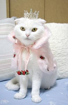 Cats Like to Get Dressed Up