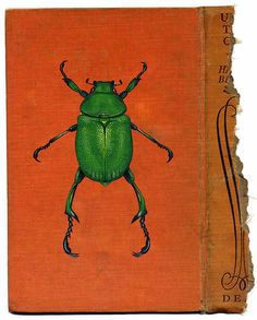 Rose Sanderson: Paintings of insects using book covers as the canvas