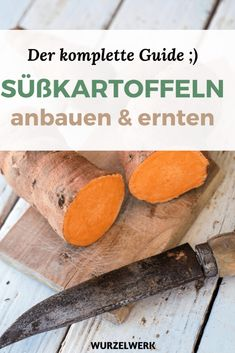 Garten Planting, growing & harvesting sweet potatoes: the complete guide! - root system Tips For Acc Diy Projects For Beginners, Gardening For Beginners, Gardening Tips, Urban Gardening, Hydrangea Seeds, Hydrangea Care, Best Chicken Coop, Chicken Feed, Planting Vegetables