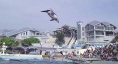 Okinawa Ocean Expo Park