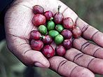 Pambazuka - A guide to helping Africa