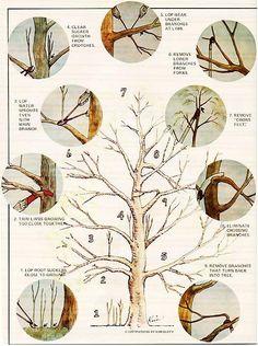 Best Bonsai Tree Pruning How To Grow Ideas Prune Fruit, Pruning Fruit Trees, Trees To Plant, How To Prune Trees, Apple Tree Pruning, Tree Planting, Fruit Tree Garden, Garden Trees, Bonsai Fruit Tree