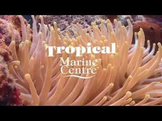 Tropical Marine Centre - Company Overview - YouTube