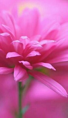 Gorgeous pink flower