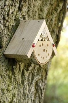 Bug Box For bees, ladybirds, and lacewings