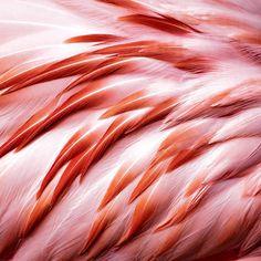 Птица фламинго красные перья