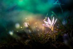 Photo Light by Borislav Aleksiev on 500px