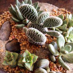 great vancouver florist High 4! Right back atcha buddy. #bloomroomvancouver #botanicalgallery #happycactus #pals #terrarium #cactusterrarium #cactus #plantdesign #custom #livingdecor #eastvan #eastvanflorist #madeineastvan #vancouver #vancouver by @bloomroomvancouver  #vancouverflorist #vancouverflorist #vancouverwedding #vancouverweddingdosanddonts