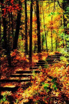 Autumn Path Print By Heather Bridenstine