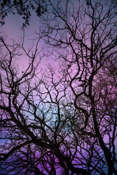 Night Sky Photography Print by LizNemmers on Etsy