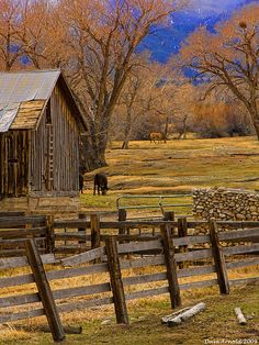 We had a corral like this with a wooden fence, old wooden buildings... the cows were either in the corral or in the field.  When we were younger our cousins came over and we had a little rodeo where the rode the bigger calves and all chased after a greased pig.  We also had a couple horses which everyone who came to our place liked to ride.