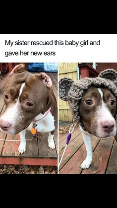 27 Dog Memes For When You Need That Daily Cute Fix 27 chiens memes pour quand vous avez besoin de ce correctif quotidien mignon – Cheezburger – Funny Memes Cute Funny Animals, Cute Baby Animals, Funny Cute, Funny Dogs, Animals And Pets, Cute Puppies, Cute Dogs, Cute Babies, Beagle Puppies