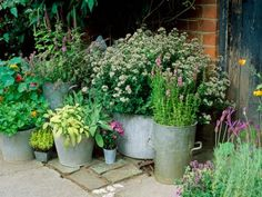 Medicinal and culinary herbs almost seem to have been designed to grow in containers, and the sheer range of pots, troughs, and recycled artifacts that can be successfully used is limited only by your imagination.