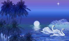 Swans à noite.  por RubyRedRocks567