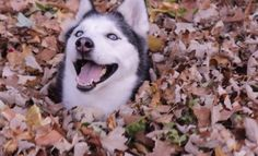 23 Funny Animals Who May Love Fall More Than You #funnycats #funnydogs #fallmemes #fallpics #cuteanimals