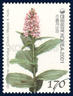 Korean Orchid Series (1st), Gymnadenia camtschatica (Cham.) Miyabe et Kudo, Plants, Green, Pink, 2001 11 12, 한국의 난초 시리즈(첫번째묶음), 2001년 11월 12일, 2184, 주름제비란, postage 우표