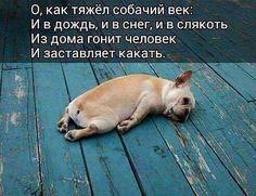 12928199_1146320015398500_4671467459669841014_n.jpg (492×378)