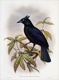 Birds of paradise 31