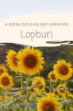 Der er flere gode oplevelser udenfor Lopburi. Se bl.a. templer, solsikkemarker og Buddhas fodspor.