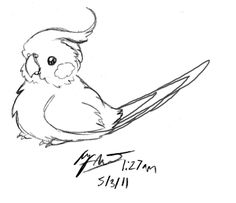 cockatiel drawings - Google Search