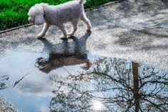 appostamento dalla pozzanghera - dopo che ha piovuto anche una pozzanghera può rivelarsi un magico specchio riflettente...