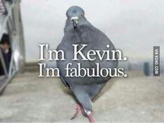 I'm Kevin.  I'm fabulous.