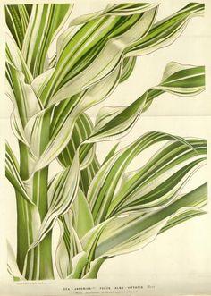 v.16 (1865-67) - Flore des serres et des jardins de l'Europe - Biodiversity Heritage Library