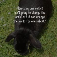 So true. It all begins with making a difference for one. If more people do that, many more rabbits are helped to find a home.