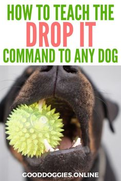 "Does your dog have something dangerous in his mouth? The ""drop it"" command, when taught correctly, will succeed even when chasing and pulling will not. #GoodDoggies #dogtrainingtips"