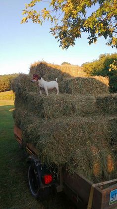 Hay time in Oregon, supervisor on board