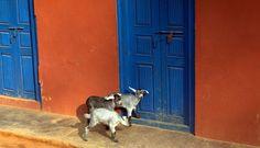 Door to Door by Pritush on 500px