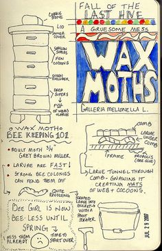 Yikes....ok, note to self: wax moths = bad news. Learn much more at http://www.mahakobees.com/blog