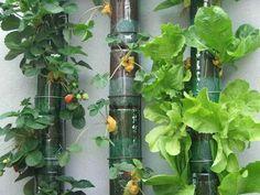 reciclado de botellas de plastico - jarrones y macetas 5
