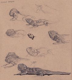 Bearded Dragon sketches by richunkleskeletun