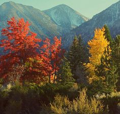 Fall in Gardnerville