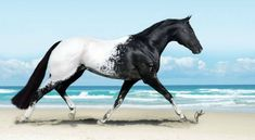 Breathtakingly Beautiful Horses Oh my. You don't often see an Appaloosa quite this distinctively colored--so intensely black and white. You don't often see an Appaloosa quite this distinctively colored--so intensely black and white. Majestic Horse, Majestic Animals, Rare Animals, Animals Dog, Unique Animals, Jungle Animals, Wild Animals, Beautiful Horse Pictures, Beautiful Horses