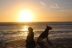 Honden strand