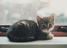 window kitten!