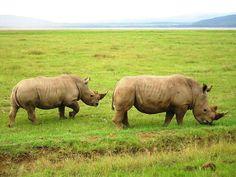 Giraffe, Elephant, Serengeti National Park, Baboon, Hyena, Green Nature, Leopards, Acacia, Impala