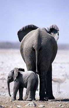 Elephants in Etosha National Park, Namibia