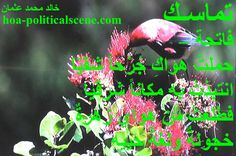 """Snippet of poetry from """"Consistency"""", by poet & journalist Khalid Mohammed Osman on a honey eater, a bird feeding on flowers and honey."""