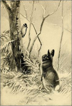 """Image from page 171 of """"Four-footed Americans and their kin"""" (1898) 