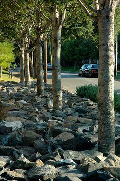 Rain Garden, Garden Paths, Plant Design, Garden Design, Landscape Architecture, Landscape Design, What Is Landscape, Landscape Materials, Landscaping Supplies