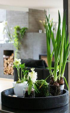 Las flores de los bulbos son espectaculares y muy olorosas. Aprende algunos trucos para que puedas disfrutar de ellas en casa durante todo el año