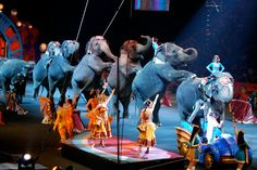 """""""The esteemed elephants of Ringling Brothers Barnum & Bailey Circus performed for the last time Sunday, officially entering retirement and signaling the end of the show's long-standing use of trained pachyderms. USA Today reports the circus has been employing elephants in their acts for 145 years, but local and global restrictions on the use of live animals in such performances and continued pressure from animal rights activists have caused Ringling Bros. to finally conclude the practice."""""""
