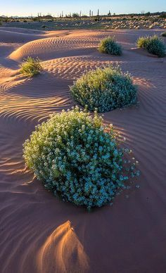 Cabeza Prieta - Desert of Arizona, U.S (by paulgillphoto on Flickr)