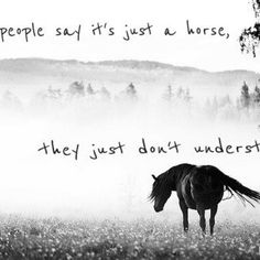 People who say its just a horse, doesn't understand